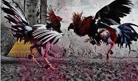 bandar ayam thailand